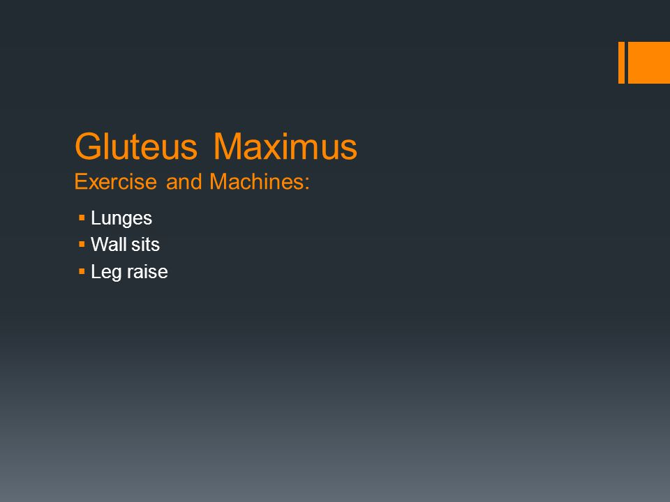 Gluteus Maximus Exercise and Machines:  Lunges  Wall sits  Leg raise
