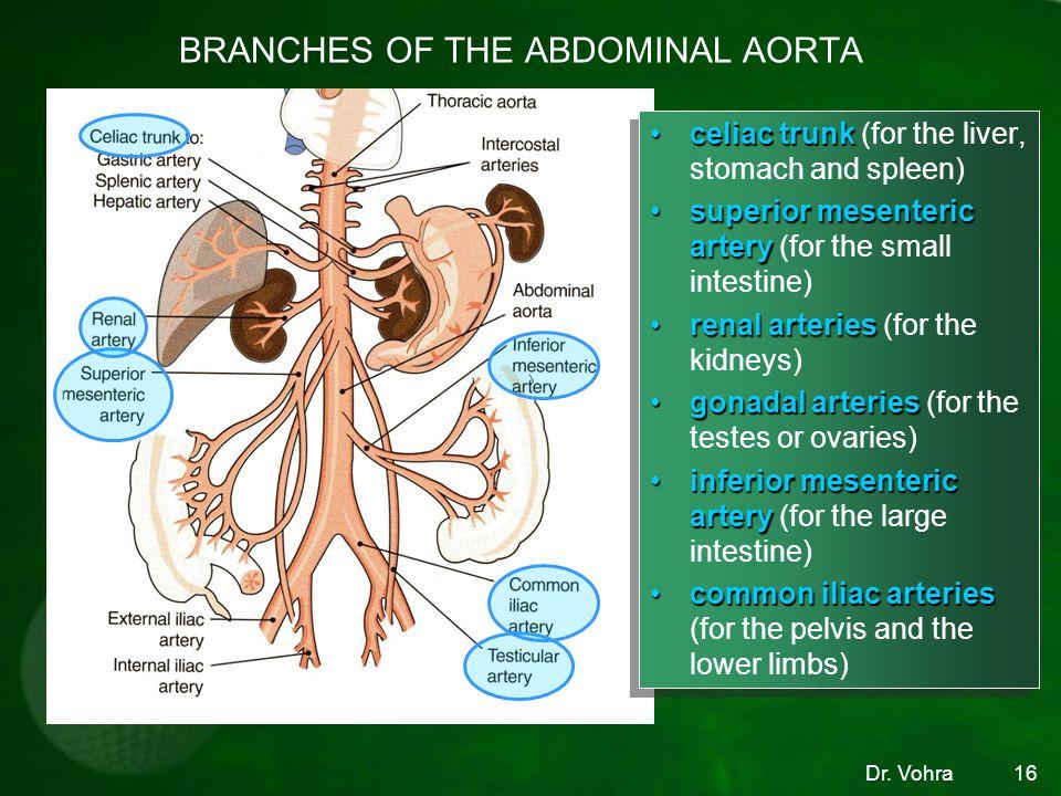 Dr. Vohra16 BRANCHES OF THE ABDOMINAL AORTA celiac trunkceliac trunk (for the liver, stomach and spleen) superior mesenteric arterysuperior mesenteric