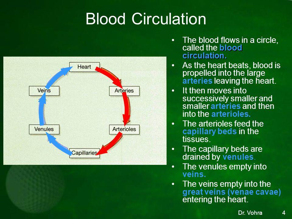 4 Blood Circulation blood circulation.The blood flows in a circle, called the blood circulation.