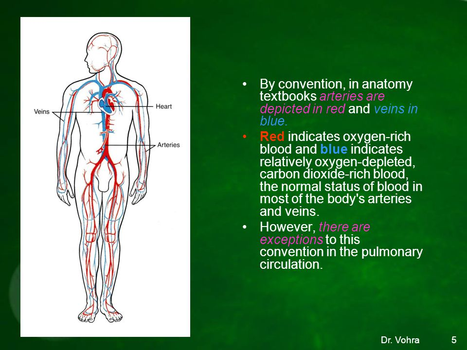 5 By convention, in anatomy textbooks arteries are depicted in red and veins in blue.
