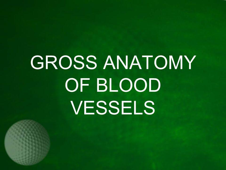 GROSS ANATOMY OF BLOOD VESSELS