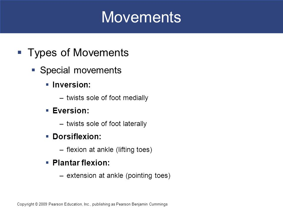 Copyright © 2009 Pearson Education, Inc., publishing as Pearson Benjamin Cummings Movements  Types of Movements  Special movements  Inversion: –twi