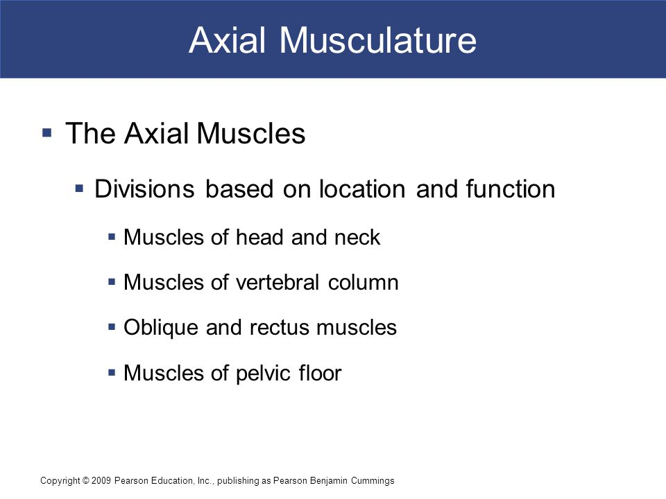 Copyright © 2009 Pearson Education, Inc., publishing as Pearson Benjamin Cummings Axial Musculature  The Axial Muscles  Divisions based on location