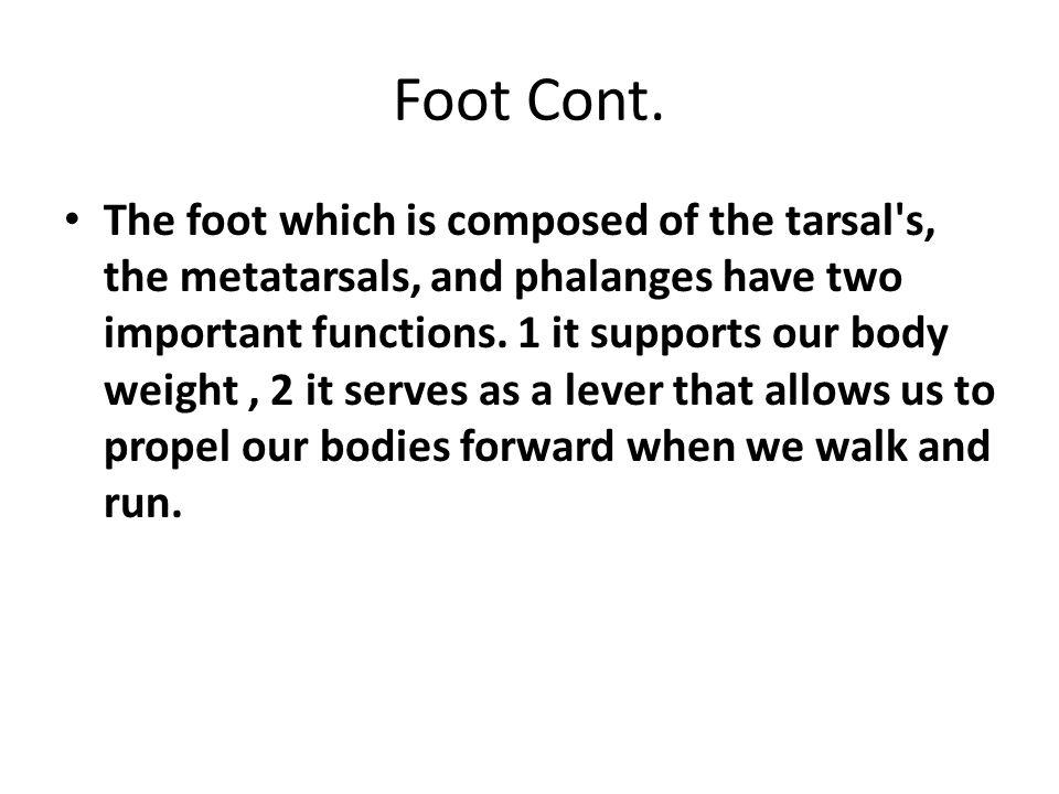 The Patella(Knee-Cap) The patella or kneecap is a large, triangular sesamoid bone between the femur and the tibia.