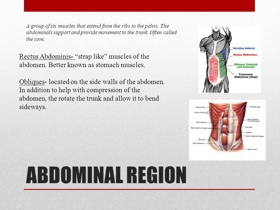 ABDOMINAL REGION A group of six muscles that extend from the ribs to the pelvis. The abdominals support and provide movement to the trunk. Often calle