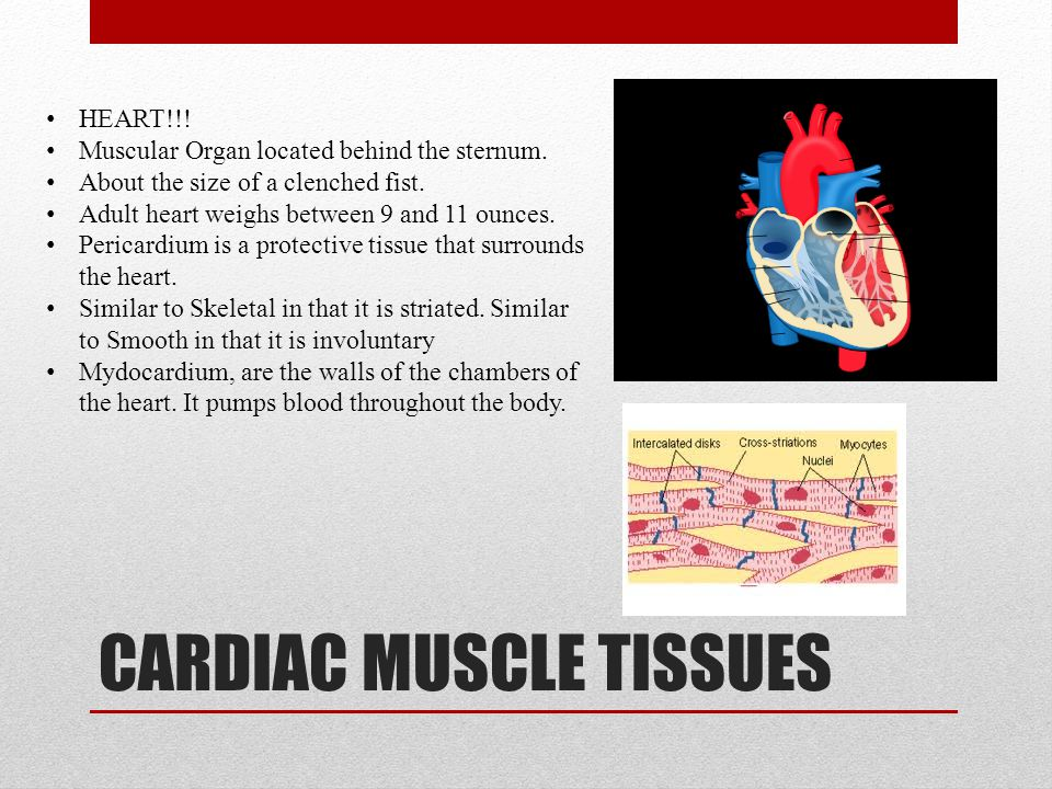 SMOOTH MUSCLE TISSUES Involuntary/Non-Striated Muscle Single Unit/ Multi-Unit Found within the walls of blood vessels.