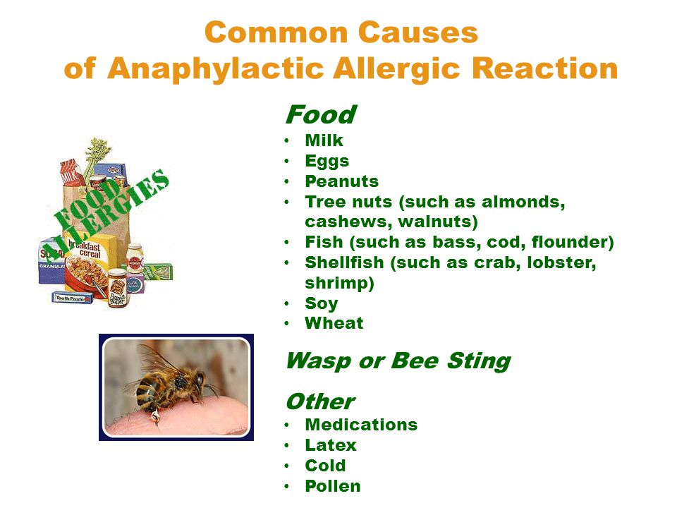 Food Milk Eggs Peanuts Tree nuts (such as almonds, cashews, walnuts) Fish (such as bass, cod, flounder) Shellfish (such as crab, lobster, shrimp) Soy Wheat Wasp or Bee Sting Other Medications Latex Cold Pollen Common Causes of Anaphylactic Allergic Reaction