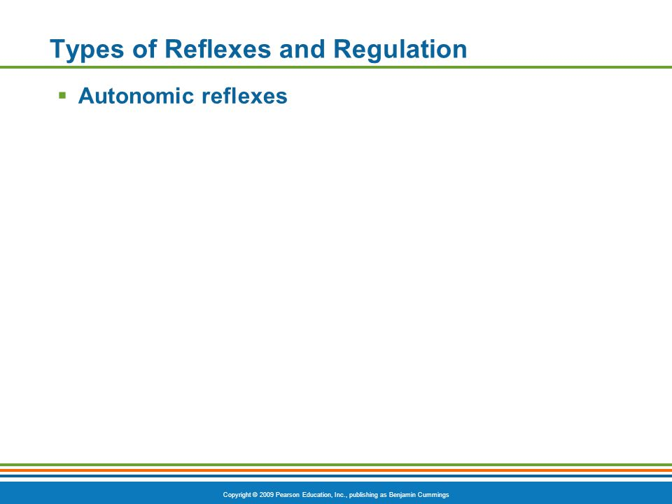 Copyright © 2009 Pearson Education, Inc., publishing as Benjamin Cummings Types of Reflexes and Regulation  Autonomic reflexes
