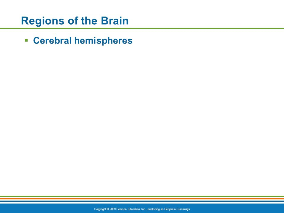 Copyright © 2009 Pearson Education, Inc., publishing as Benjamin Cummings Regions of the Brain  Cerebral hemispheres