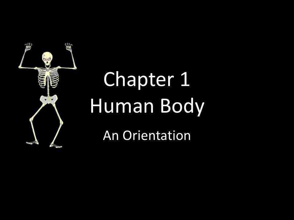 Chapter 1 Human Body An Orientation