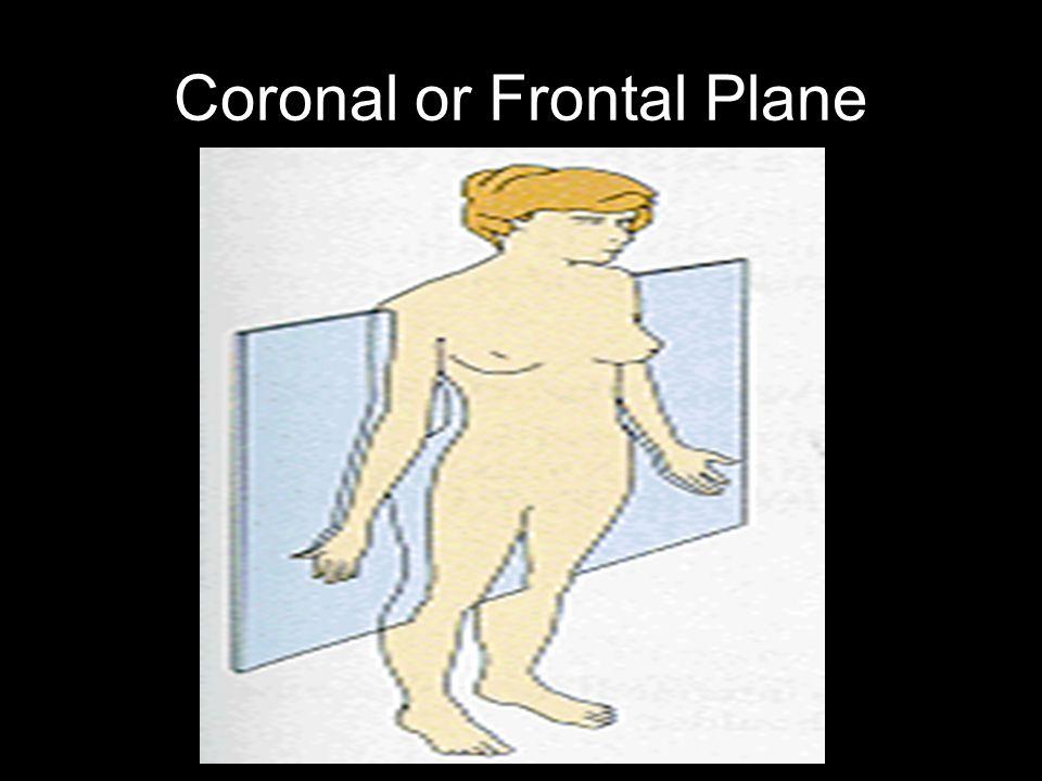 Coronal or Frontal Plane