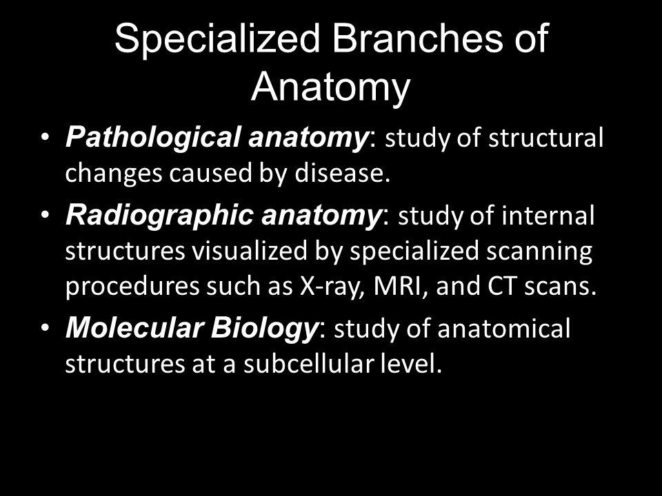 Pathological anatomy: Radiographic anatomy: Molecular Biology