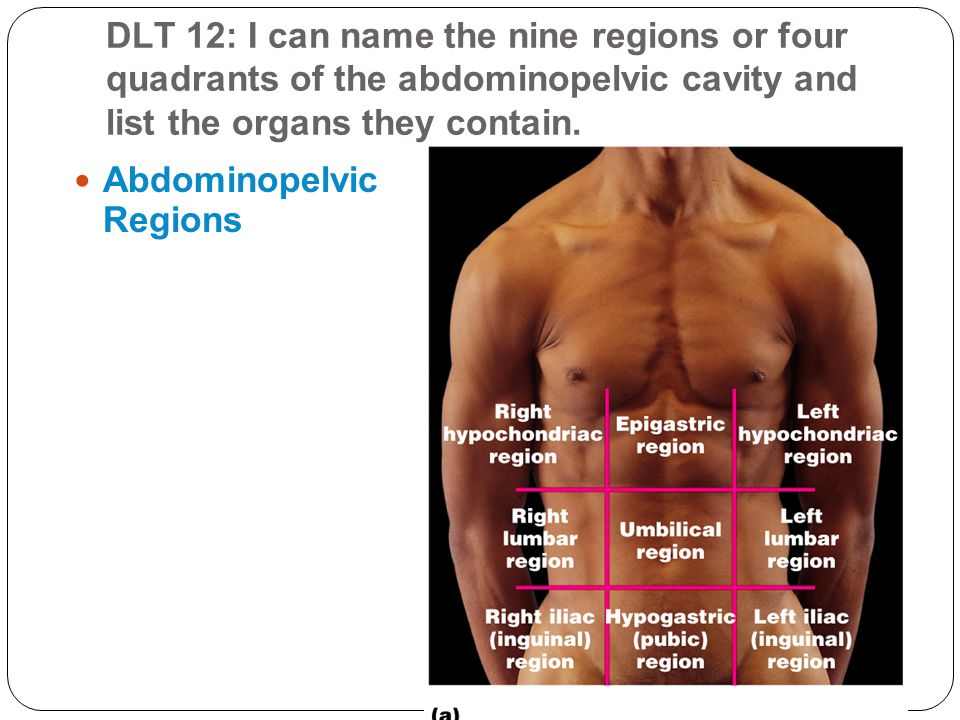 DLT 12: I can name the nine regions or four quadrants of the abdominopelvic cavity and list the organs they contain. Abdominopelvic Regions