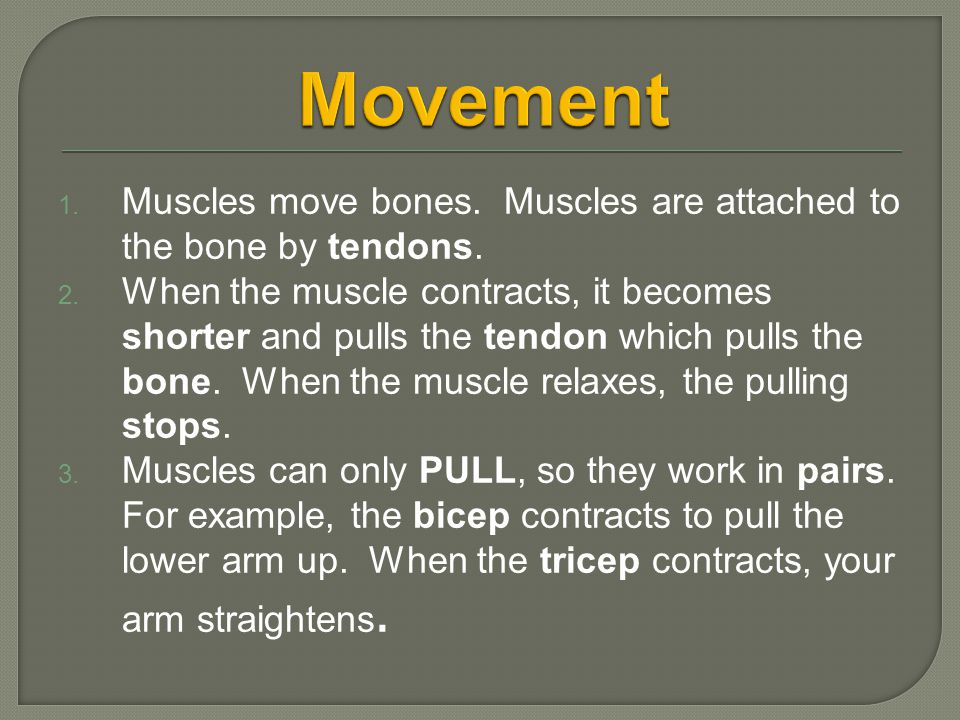1. Muscles move bones. Muscles are attached to the bone by tendons. 2. When the muscle contracts, it becomes shorter and pulls the tendon which pulls