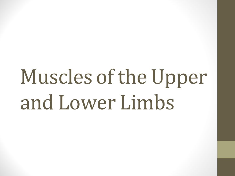 Muscles of the Upper and Lower Limbs