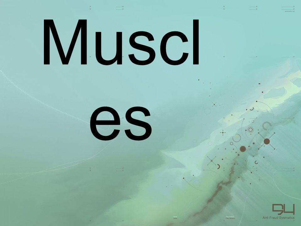 Muscl es