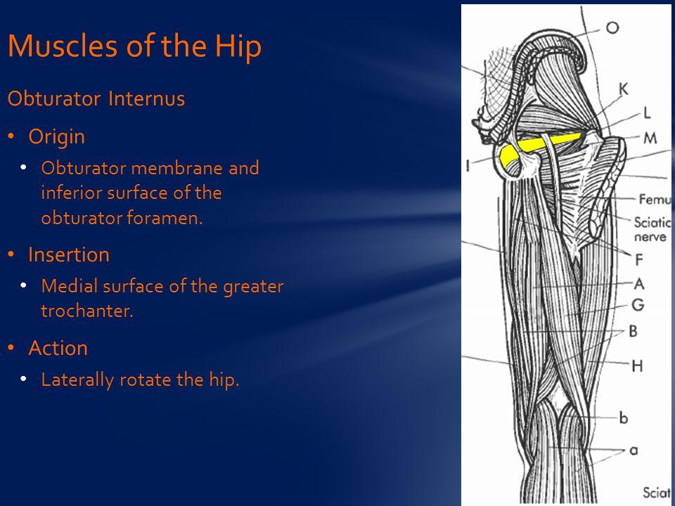Obturator Internus Origin Obturator membrane and inferior surface of the obturator foramen.