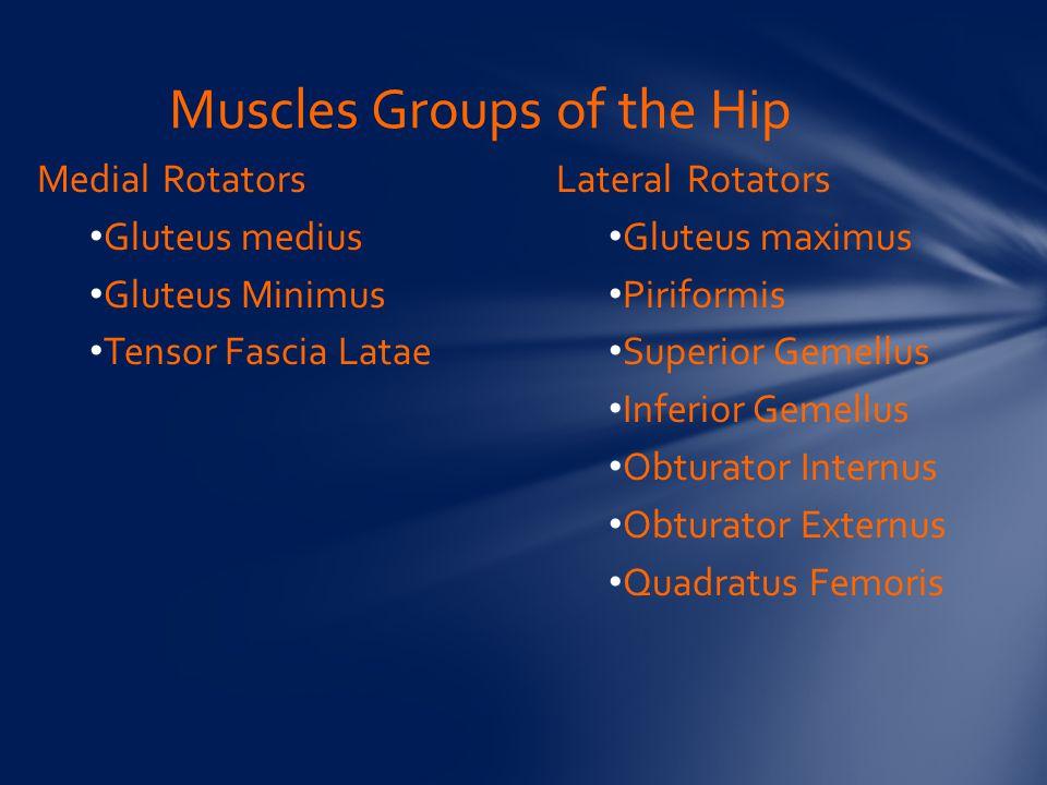 Muscles Groups of the Hip Medial Rotators Gluteus medius Gluteus Minimus Tensor Fascia Latae Lateral Rotators Gluteus maximus Piriformis Superior Gemellus Inferior Gemellus Obturator Internus Obturator Externus Quadratus Femoris