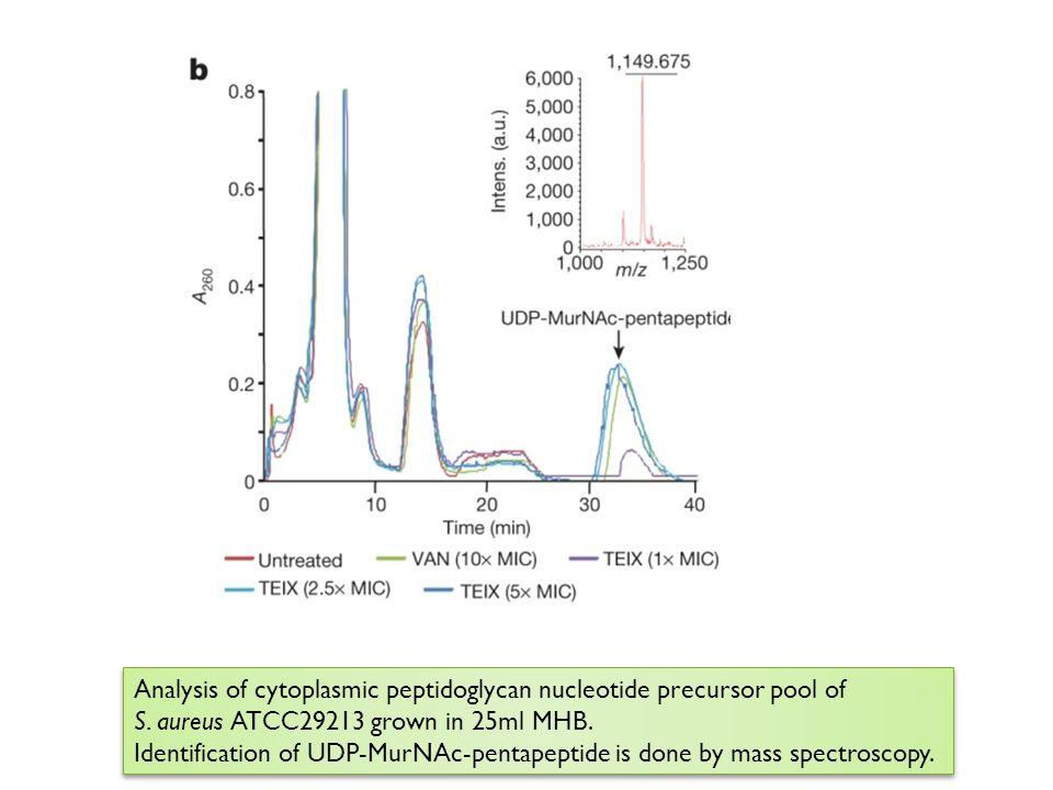 Analysis of cytoplasmic peptidoglycan nucleotide precursor pool of S. aureus ATCC29213 grown in 25ml MHB. Identification of UDP-MurNAc-pentapeptide is