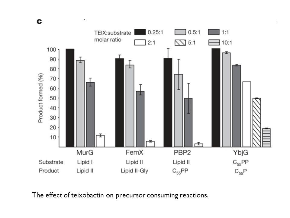 The effect of teixobactin on precursor consuming reactions.