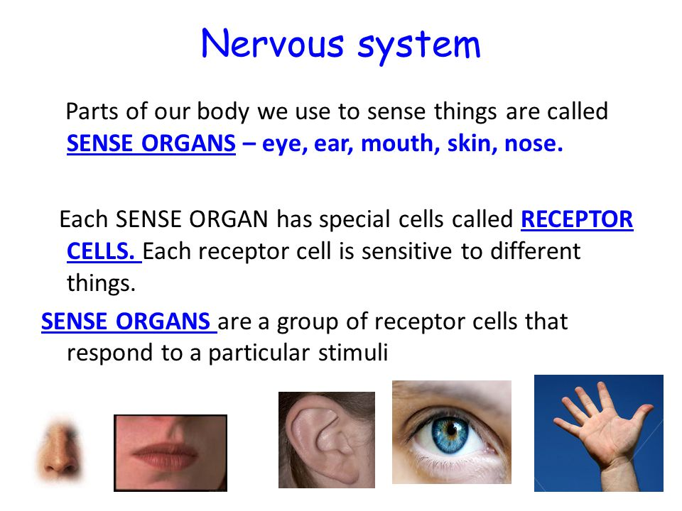 Nervous system Parts of our body we use to sense things are called SENSE ORGANS – eye, ear, mouth, skin, nose. Each SENSE ORGAN has special cells call