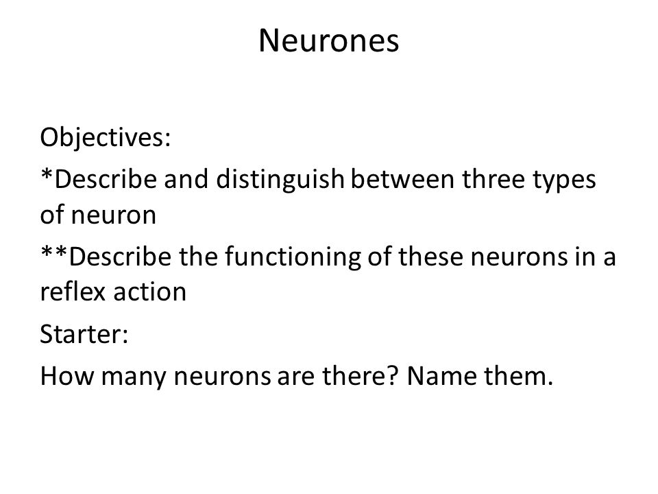Neurones Objectives: *Describe and distinguish between three types of neuron **Describe the functioning of these neurons in a reflex action Starter: H