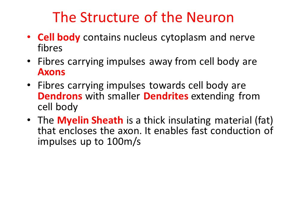 The Structure of the Neuron Cell body contains nucleus cytoplasm and nerve fibres Fibres carrying impulses away from cell body are Axons Fibres carryi