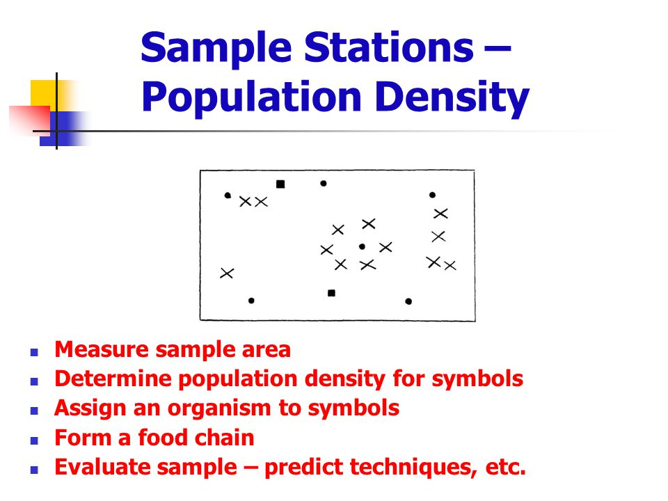 Sample Stations – Population Density Measure sample area Determine population density for symbols Assign an organism to symbols Form a food chain Eval