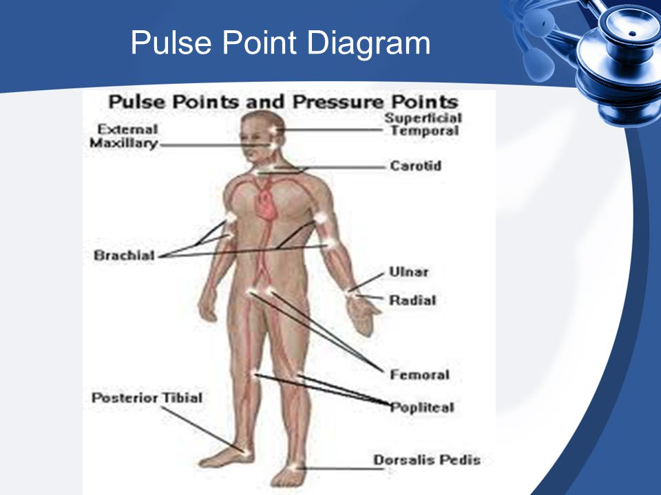 Pulse Point Diagram
