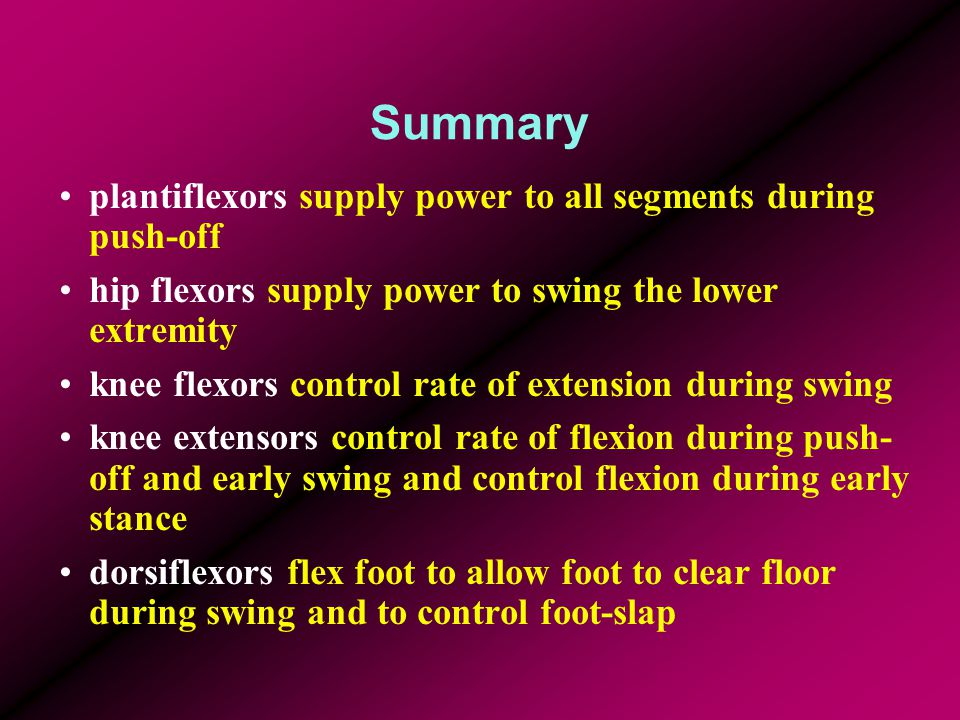 Summary plantiflexors supply power to all segments during push-off hip flexors supply power to swing the lower extremity knee flexors control rate of
