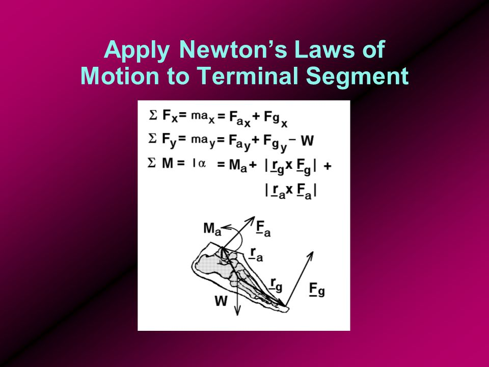 Apply Reactions to Next Segment apply reactions of terminal segment to distal end of adjacent segment (leg) in kinematic chain compute its net forces and moments at proximal end