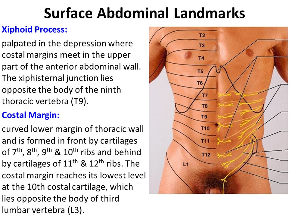 Surface Abdominal Landmarks Iliac Crest can be felt along its entire length from anterior superior iliac spine to posterior superior iliac spine.