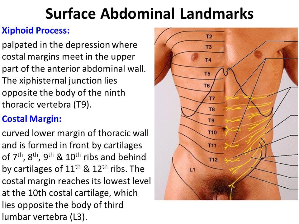 Body Surface Anatomy Gallery Human Body Anatomy