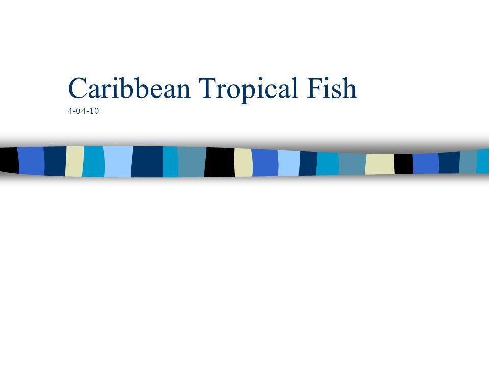 Caribbean Tropical Fish 4-04-10