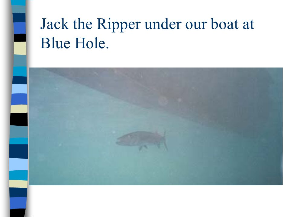 Jack the Ripper under our boat at Blue Hole.