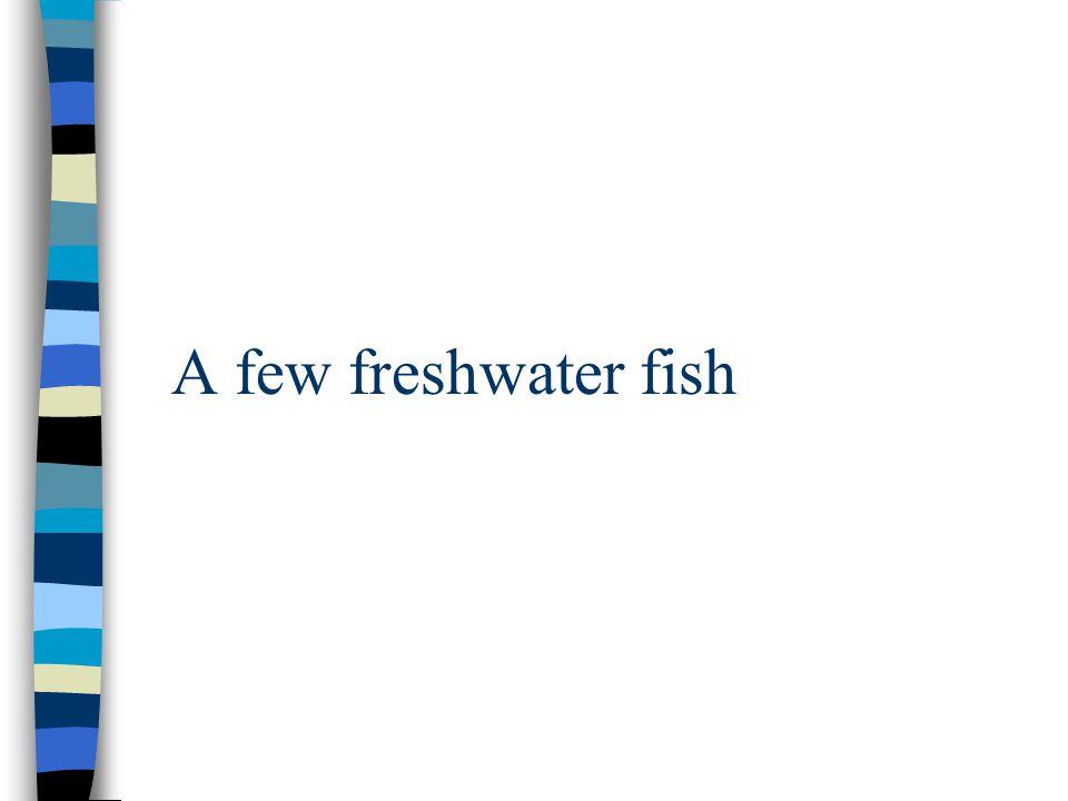 A few freshwater fish