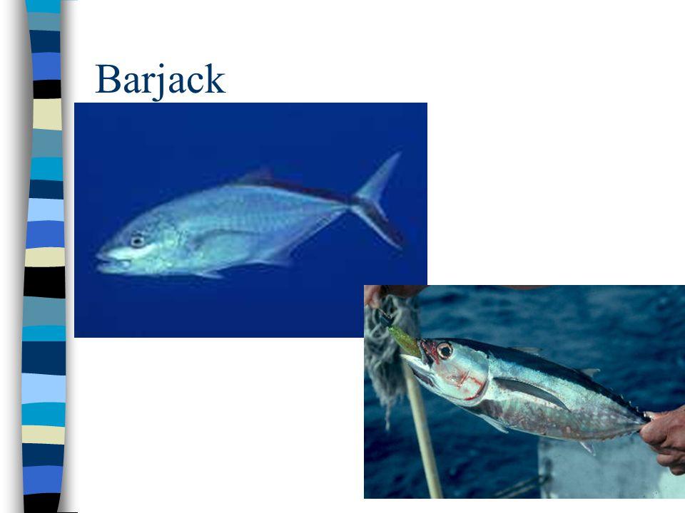 Barjack