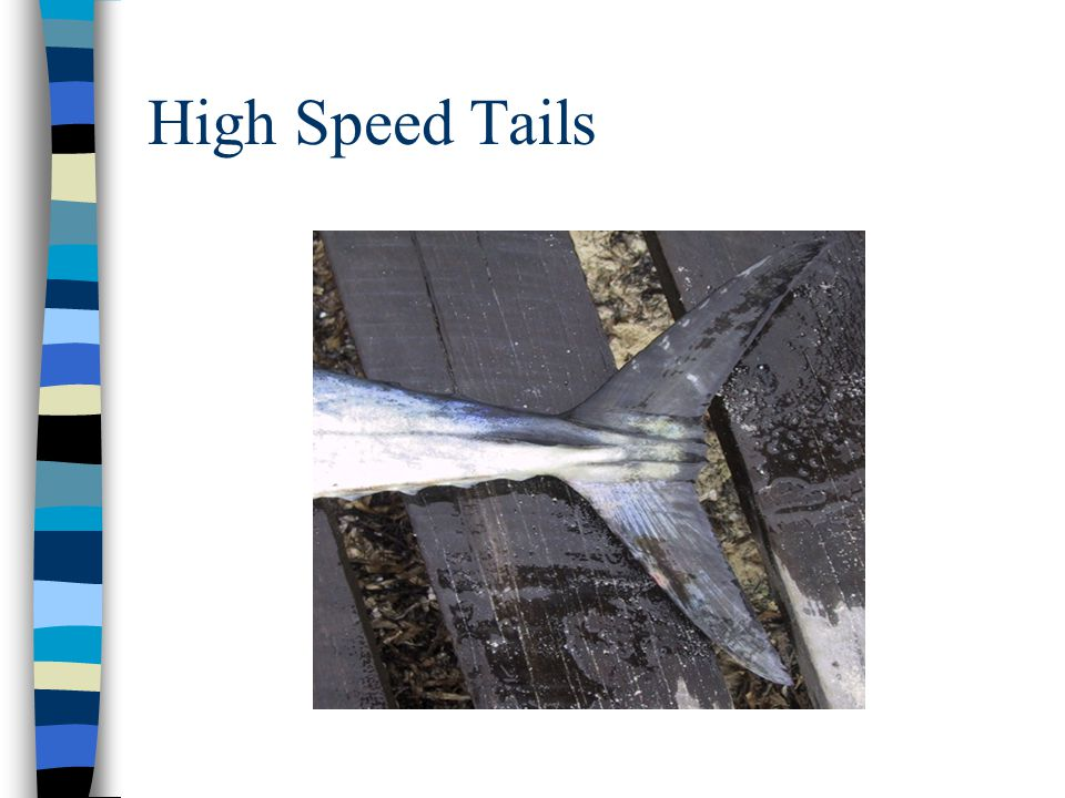 High Speed Tails