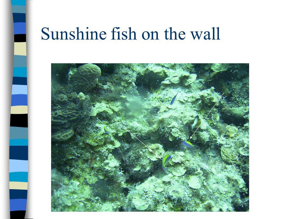 Sunshine fish on the wall