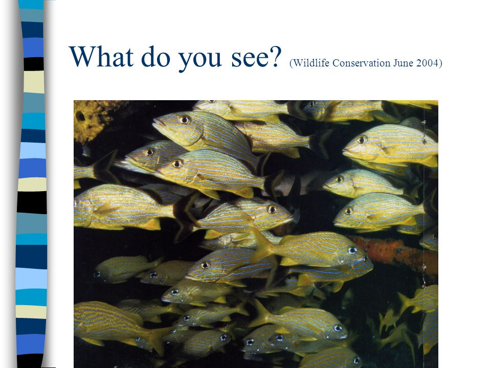 What do you see (Wildlife Conservation June 2004)