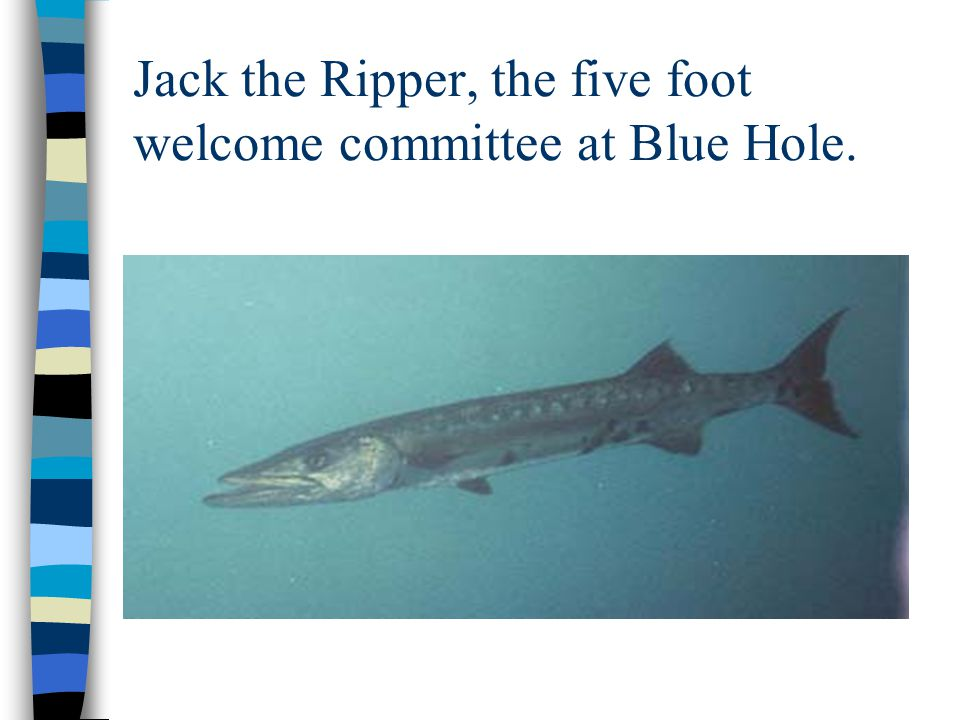 Jack the Ripper, the five foot welcome committee at Blue Hole.