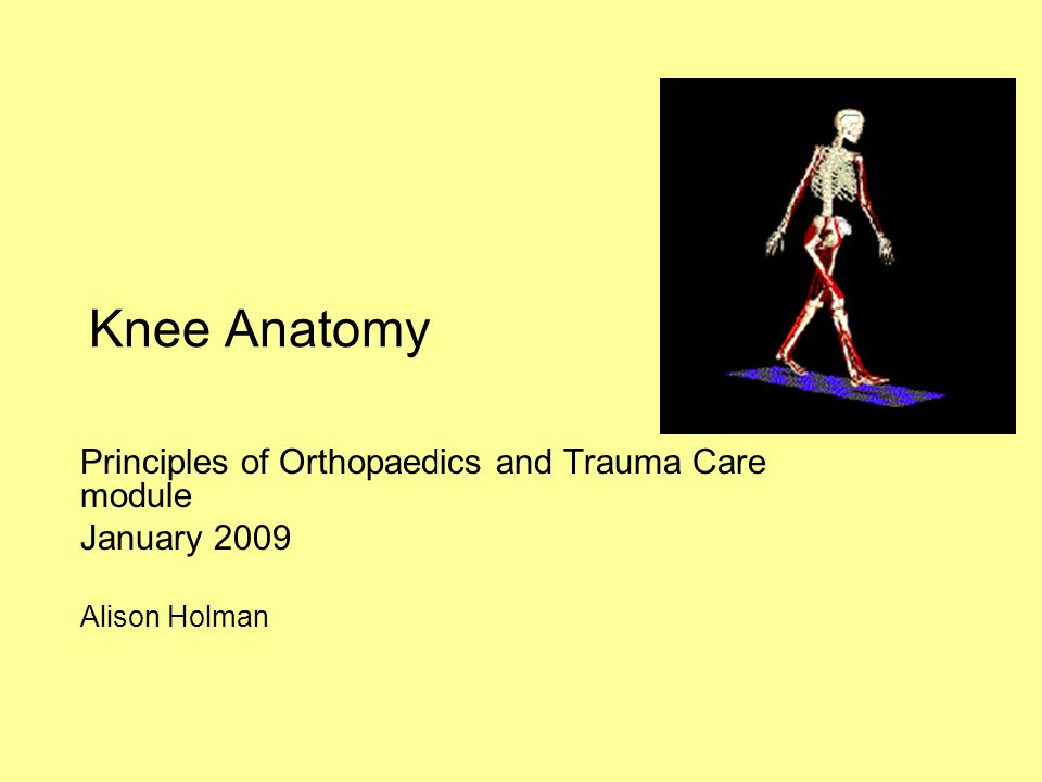 Knee Anatomy Principles of Orthopaedics and Trauma Care module January 2009 Alison Holman