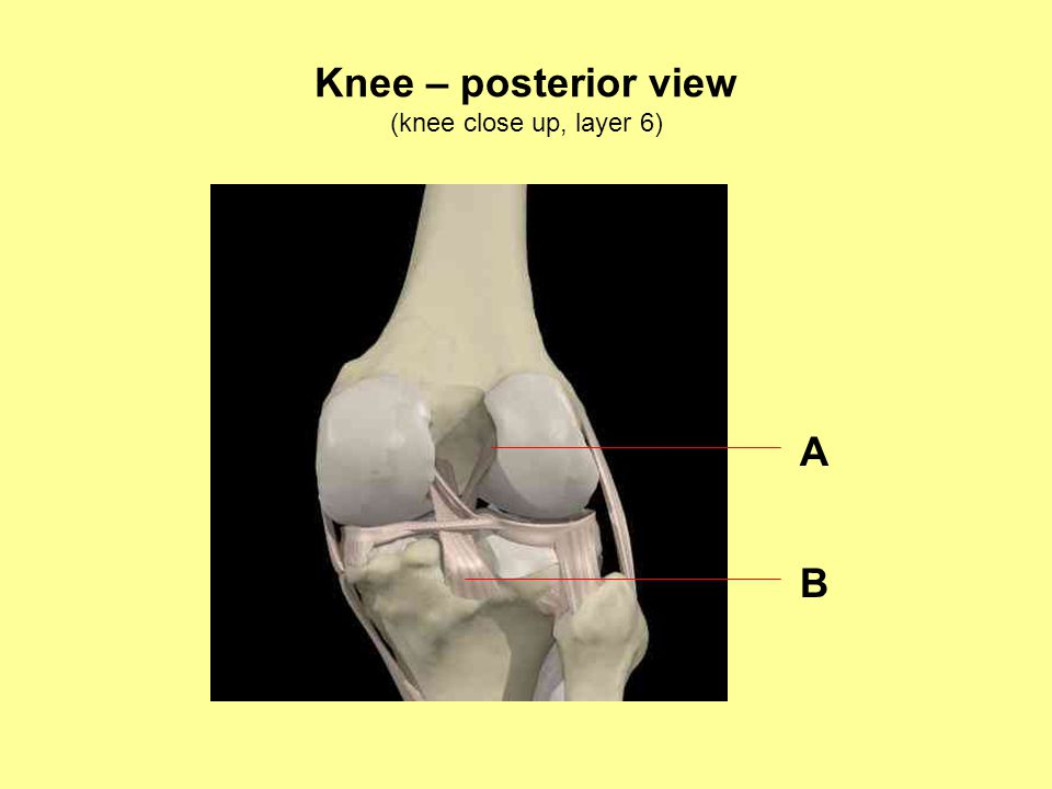 Knee – posterior view (knee close up, layer 6) A B