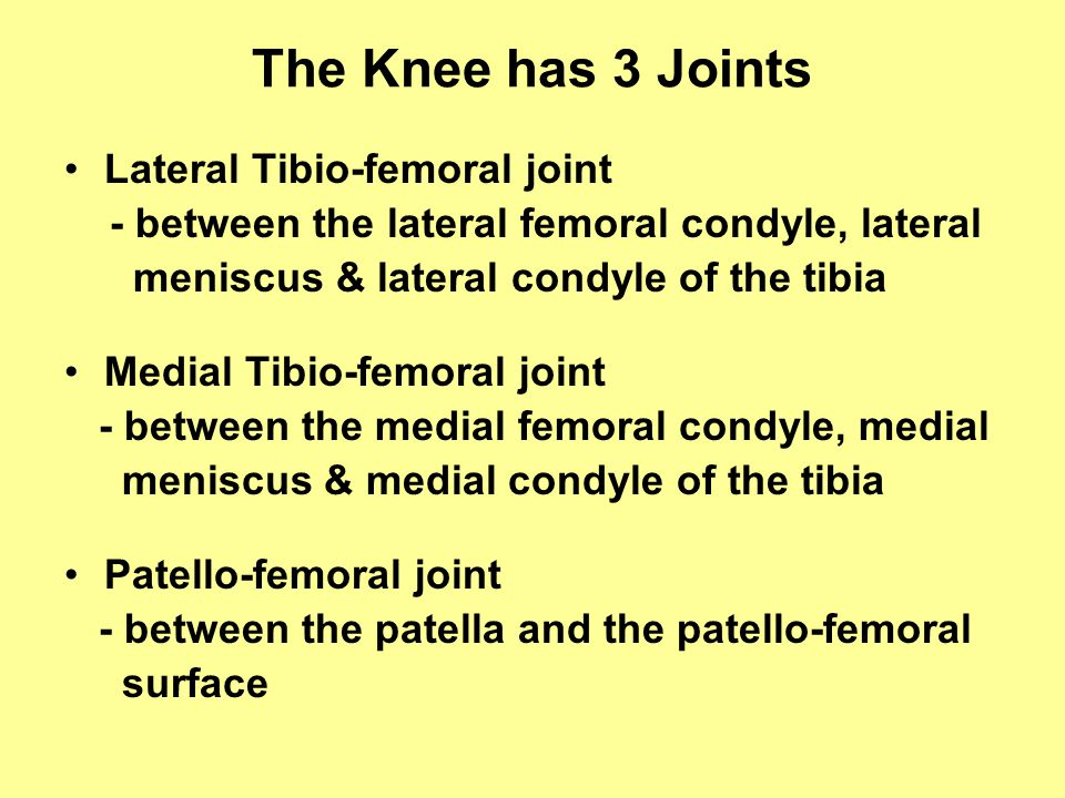 The Knee has 3 Joints Lateral Tibio-femoral joint - between the lateral femoral condyle, lateral meniscus & lateral condyle of the tibia Medial Tibio-femoral joint - between the medial femoral condyle, medial meniscus & medial condyle of the tibia Patello-femoral joint - between the patella and the patello-femoral surface