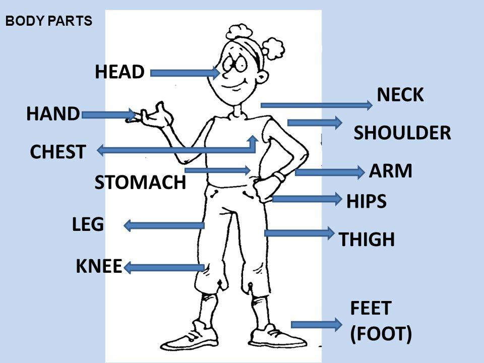 HEAD NECK SHOULDER HAND CHEST STOMACH ARM HIPS LEG KNEE THIGH FEET (FOOT) BODY PARTS