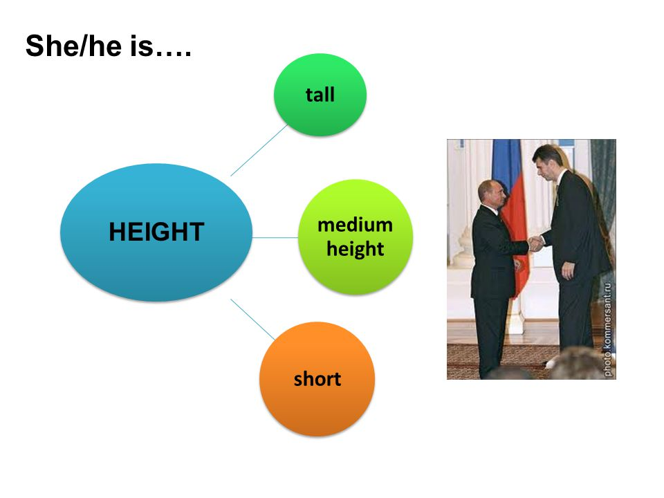 tall medium height short HEIGHT She/he is….
