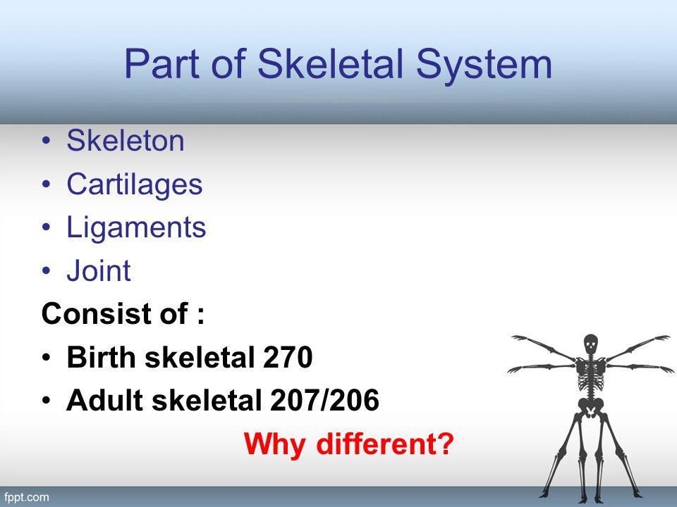 Part of Skeletal System Skeleton Cartilages Ligaments Joint Consist of : Birth skeletal 270 Adult skeletal 207/206 Why different?