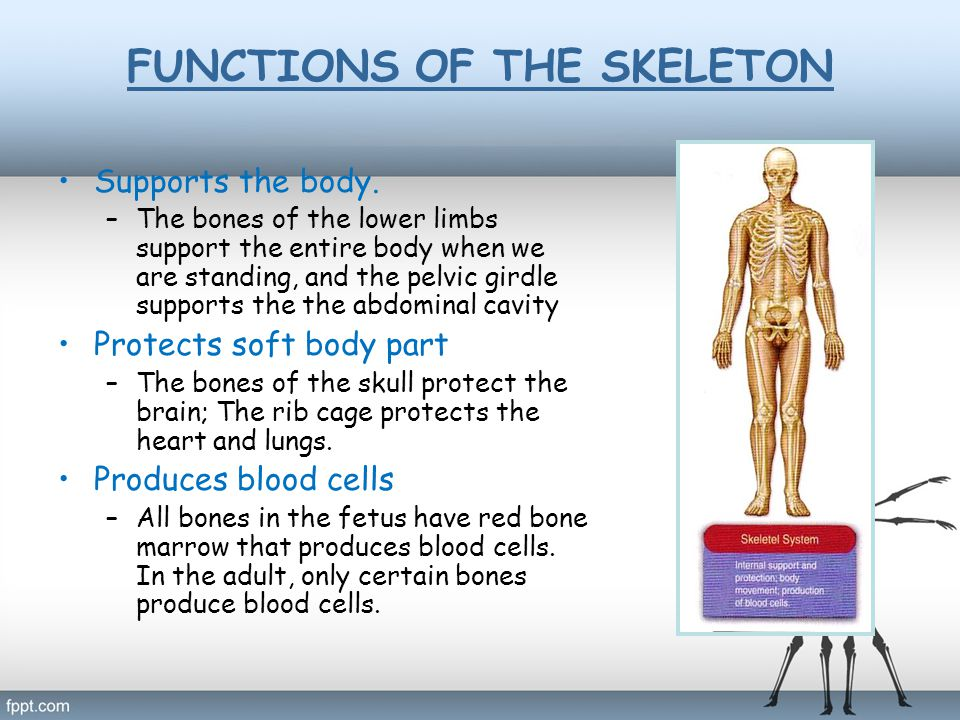 Stores minerals and fat –All bones have a matrix that contains calcium phosphate, a source of calcium ions and phosphate ions in the blood.