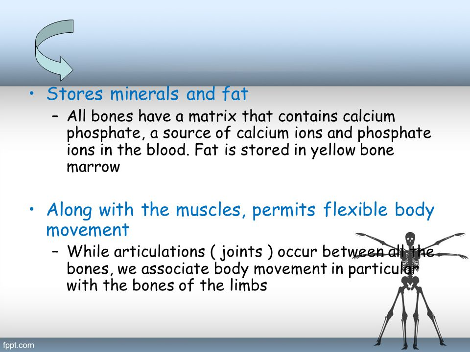 Stores minerals and fat –All bones have a matrix that contains calcium phosphate, a source of calcium ions and phosphate ions in the blood. Fat is sto