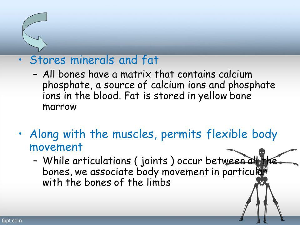 Skeletal System Divide into 2 division: Axial skeleton Appendicular skeleton